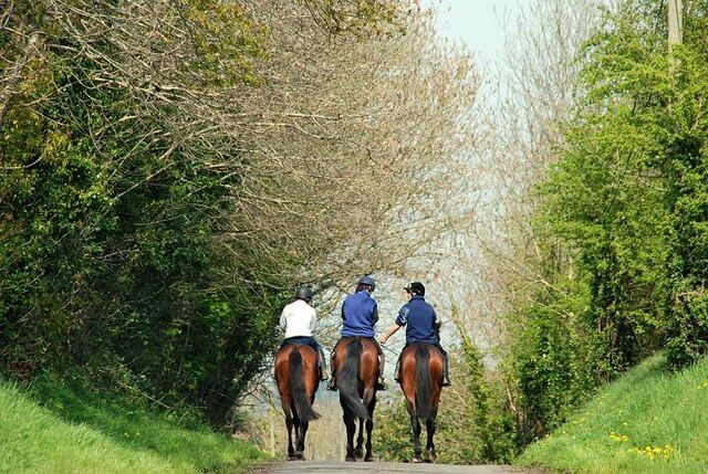 Three horse riders on a trail