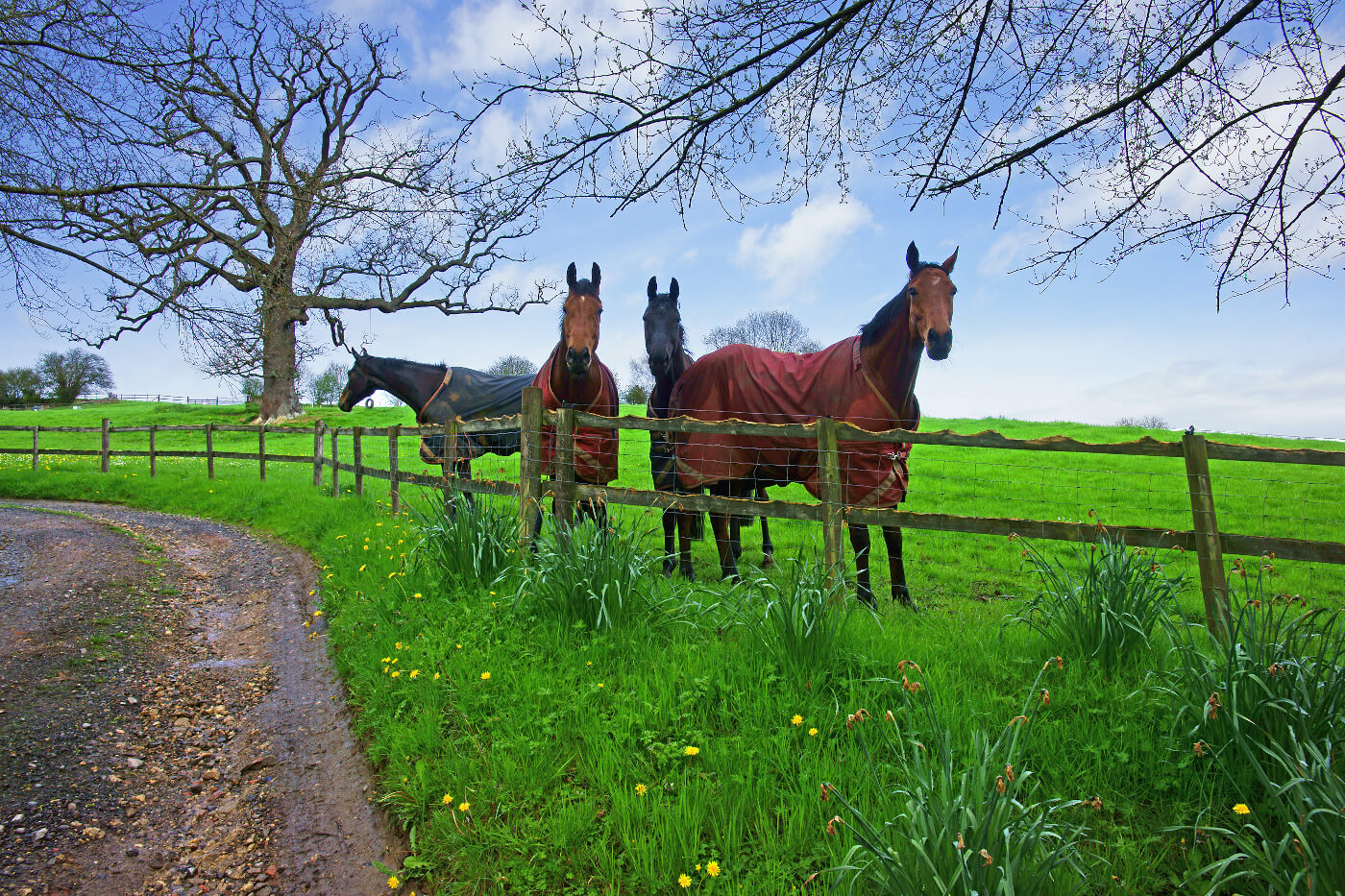 Four horses stood in a field in the Cotswolds