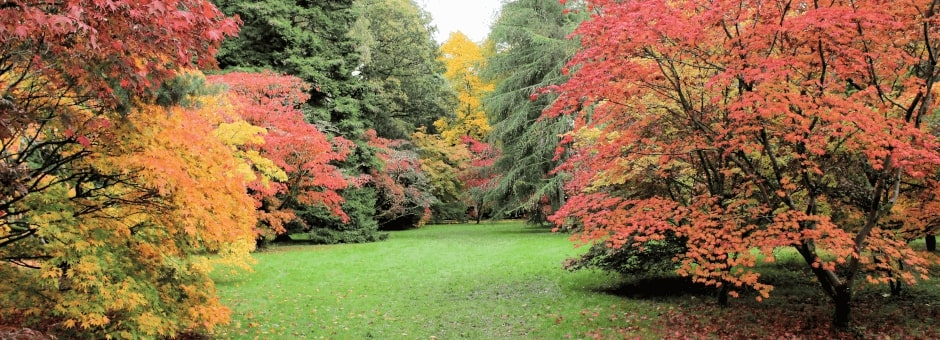 Autumnal trees at Westonbirt Arboretum