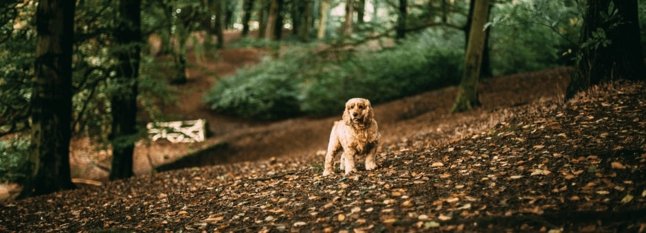 Small dog in forest