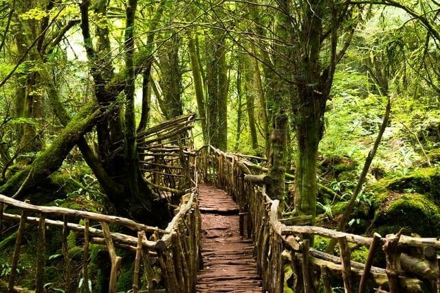 A bridge in the enchanting forest at Puzzlewood