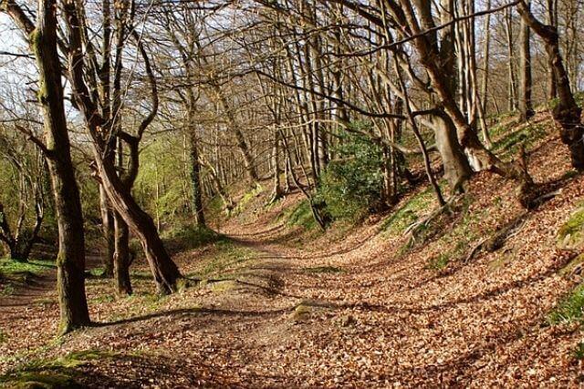 A delightful forest of dean walk